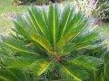 Plantas Diversas